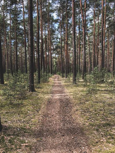 Forest gravel roads