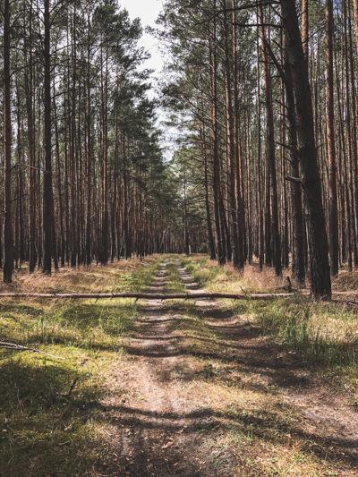 A fallen tree