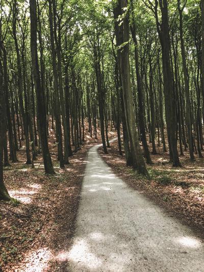 Forest roads on Rügen