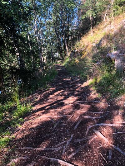 Root trails